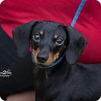 Adopt A Pet :: Maxine - Daleville, AL