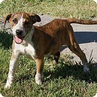 Adopt A Pet :: Brich - Joliet, IL