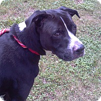 Adopt A Pet :: Bolt - Bunnell, FL