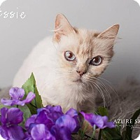 Adopt A Pet :: Essie - Glendale, AZ