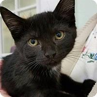 Adopt A Pet :: Tiana - Parma, OH