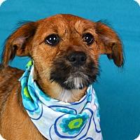 Adopt A Pet :: Dixie - Palmyra, PA