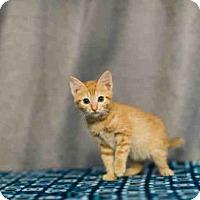 Adopt A Pet :: *JACK - Sugar Land, TX