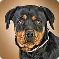 Adopt A Pet :: Bonnie - Prescott, AZ