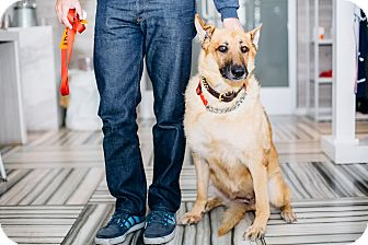 German Shepherd Dog Dog for adoption in Los Angeles, California - Ruthie
