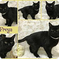 Adopt A Pet :: Freya - Joliet, IL