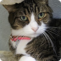 Adopt A Pet :: Mace - Bradenton, FL