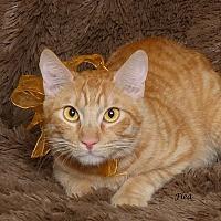 Adopt A Pet :: Flea - Kerrville, TX