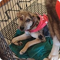 Adopt A Pet :: Bit-O-Honey - Wilmington, MA