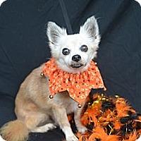 Adopt A Pet :: Newton - Plano, TX