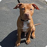 Adopt A Pet :: Trooper - Washington, PA