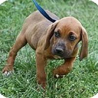 Adopt A Pet :: Rusty - Staunton, VA