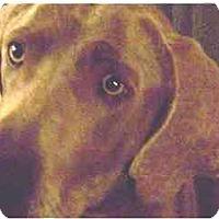 Adopt A Pet :: Jobee - Attica, NY