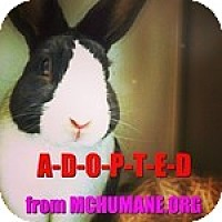 Adopt A Pet :: Spaghetti - Rockville, MD