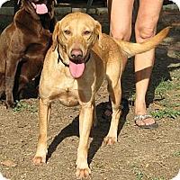 Adopt A Pet :: Megan - Spring, TX