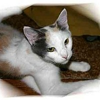 Adopt A Pet :: Annabelle - Montgomery, IL
