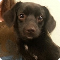 Adopt A Pet :: Nila - Orlando, FL