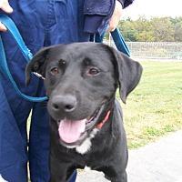 Adopt A Pet :: Jake - Lancaster, OH