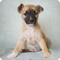 Adopt A Pet :: Wilbur - Phoenix, AZ