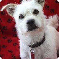 Adopt A Pet :: SID - san diego, CA