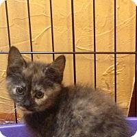 Adopt A Pet :: Luna - East McKeesport, PA
