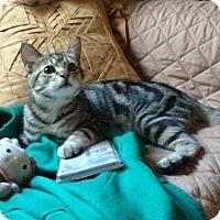 Adopt A Pet :: Tinker - San Antonio, TX