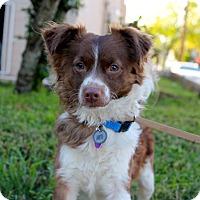 Adopt A Pet :: Freckles - Los Angeles, CA