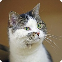Adopt A Pet :: Daisy Doodle - Kettering, OH