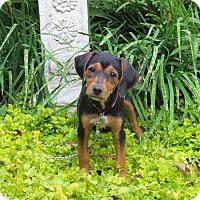 Adopt A Pet :: NELLIE - Bedminster, NJ