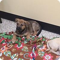 Adopt A Pet :: Geneva - Thousand Oaks, CA