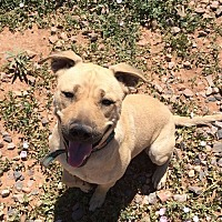 Adopt A Pet :: Joe - Clarkdale, AZ
