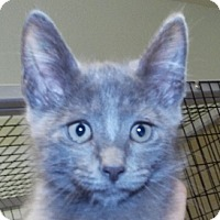 Adopt A Pet :: Dustin - Grants Pass, OR