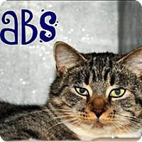 Domestic Mediumhair Cat for adoption in Cleveland, Tennessee - Babs