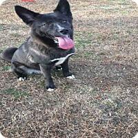 Adopt A Pet :: *NOEL - Upper Marlboro, MD