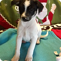 Adopt A Pet :: Rascal - Santa Ana, CA