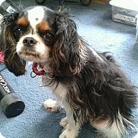Adopt A Pet :: Spencer - Courtesy Listing - Sparta, NJ