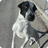 Adopt A Pet :: Shirley - Seguin, TX