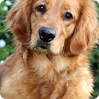 Adopt A Pet :: Autumn/Maggie (PLACED) Adoption_Pending - Glendale, AZ