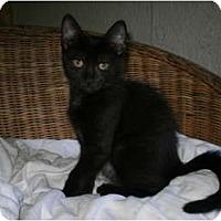 Adopt A Pet :: Ricky - Morris, PA
