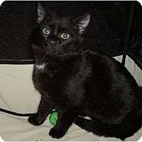 Adopt A Pet :: Twilight - Port Republic, MD