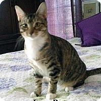 Adopt A Pet :: Junebug - Bentonville, AR