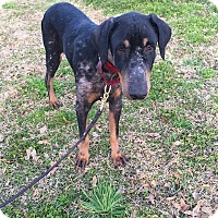 Adopt A Pet :: Mason - Fort Worth, TX