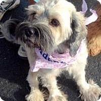 Adopt A Pet :: Zoey - Scottsdale, AZ
