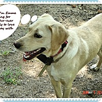 Adopt A Pet :: Emma - Franklinton, NC