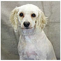 Adopt A Pet :: Chloe - Forked River, NJ