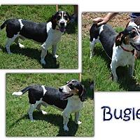 Adopt A Pet :: Bugle - Marietta, GA