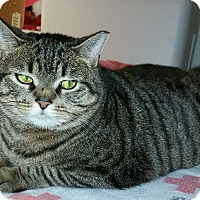 Adopt A Pet :: Big Momma - Forest Hills, NY
