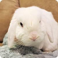 Adopt A Pet :: Charlie - Hillside, NJ