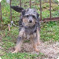 Adopt A Pet :: PHOEBE - Bedminster, NJ