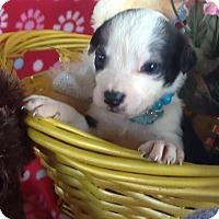 Adopt A Pet :: Anetta - springtown, TX
